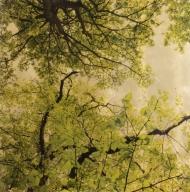 Arboris Folium