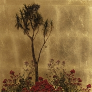Cordyline Australis Pratum Flores II