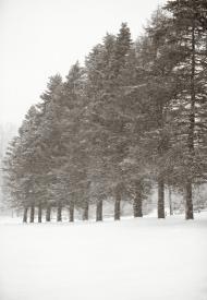 Twelve Pines