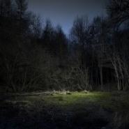 Nick Rochowski Liminal Points: The Woods