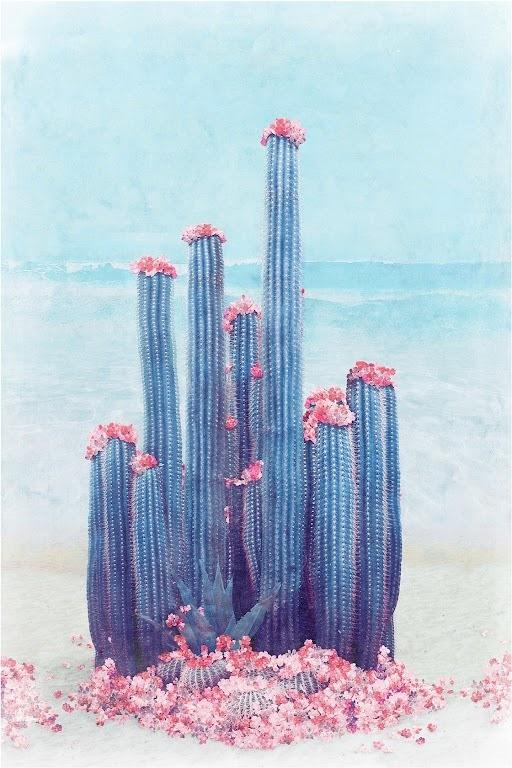Cactus Beach by Nadia Attura